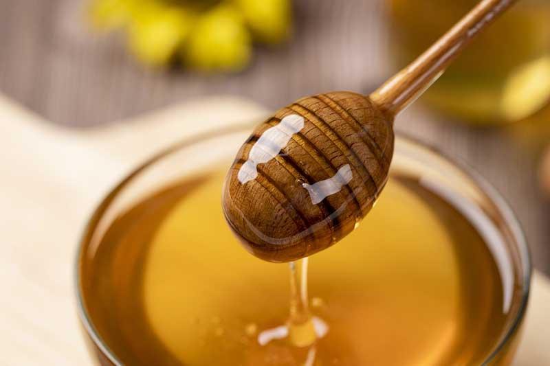 Honig für Hunde – ein beruhigendes Heilmittel für viele Situationen