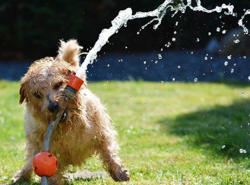 Darauf musst du im Sommer unbedingt für deinen Hund achten