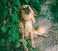 Ständiges-Hundebellen