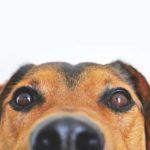 19 mögliche Gefahren beim BARFen & wie du sie vermeidest