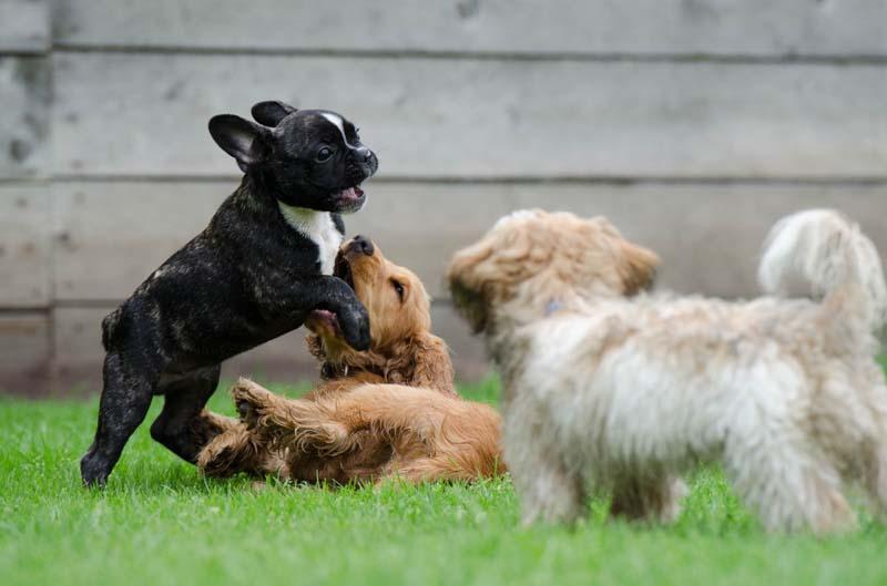 Andere Hunde treffen