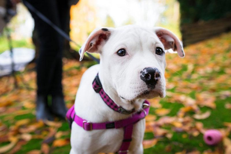 Sodbrennen beim Hund – Symptome, Behandlung & das richtige Futter