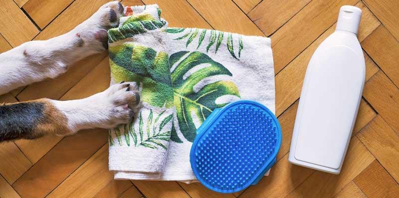 Hund-baden-Pflege-im-Anschluss