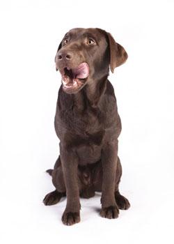 Hund-gesünder-bei-artgerechter-Ernährung