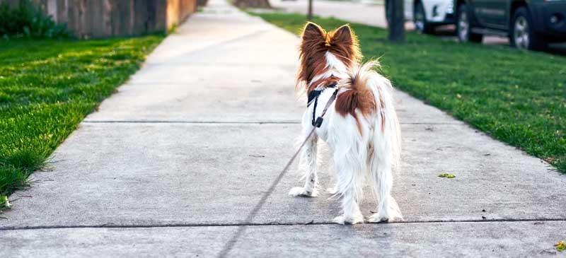 Hund-im-Sommer-richtige-Uhrzeit-zum-Gassi-gehen