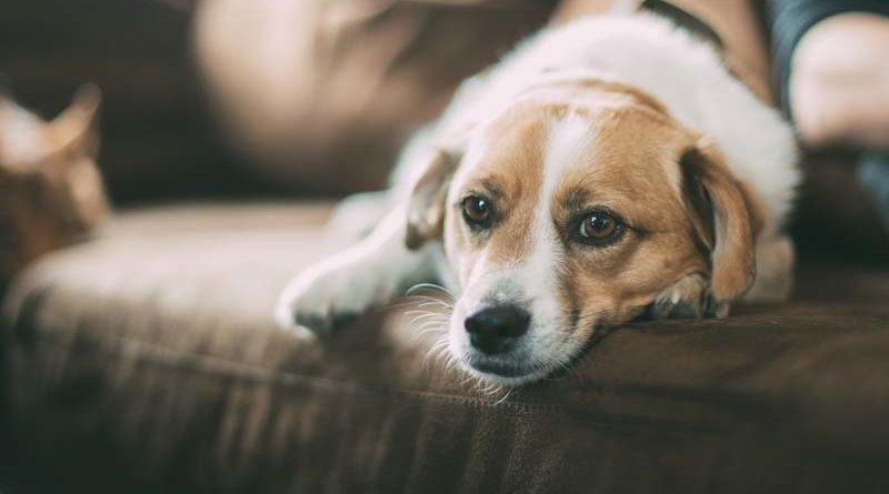 Reizdarm oder empfindlicher Magen beim Hund