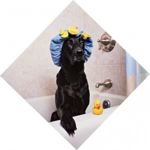 So badet dein Hund gerne
