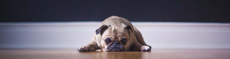 erkennen, ob der Hund Magenschmerzen hat
