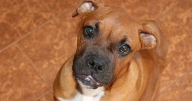 Gastritis-beim-Hund