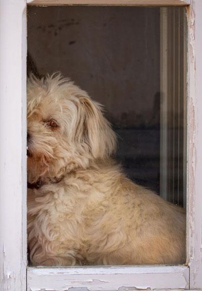 Gastritis-beim-Hund-Symptome