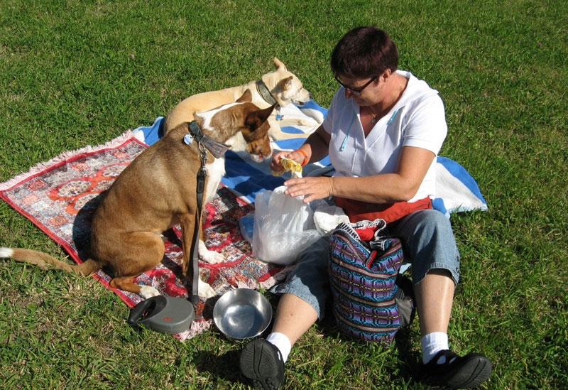 Warum du deinem Hund keine Essensreste füttern darfst