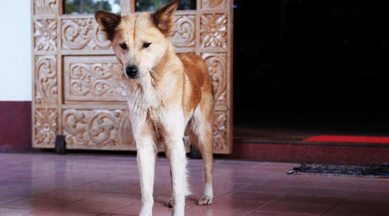 Hund-mit-Untergewicht