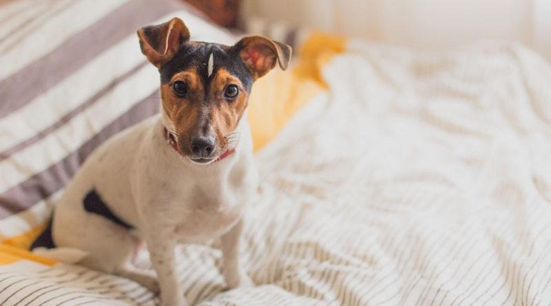 Hundefutter-bei-Übersäuerung