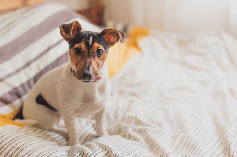 Welches Hundefutter braucht es bei Übersäuerung?