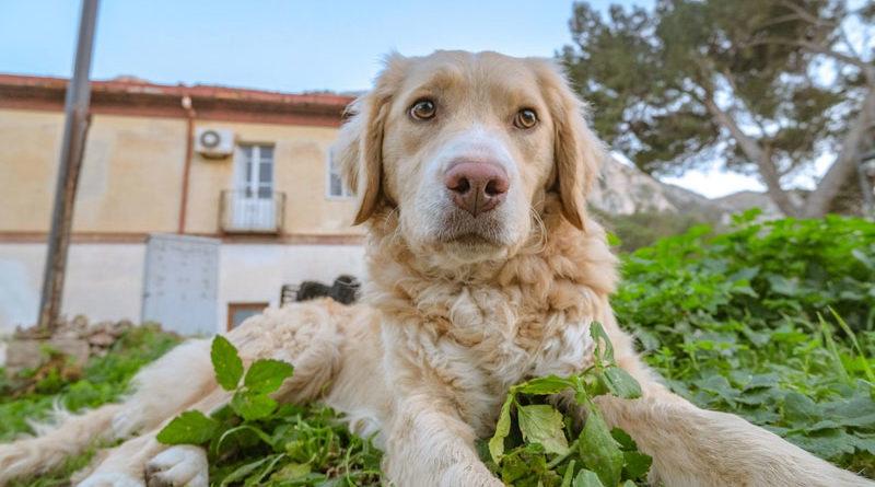 Lebererkrankung-beim-Hund