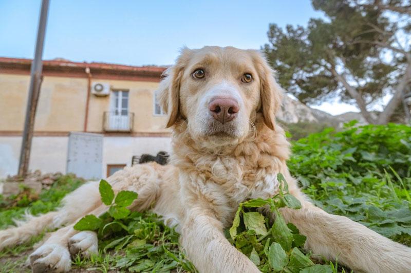 Lebererkrankung beim Hund – Symptome, Behandlung, Ernährung