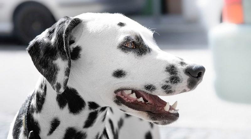 Purinarmes-Hundefutter