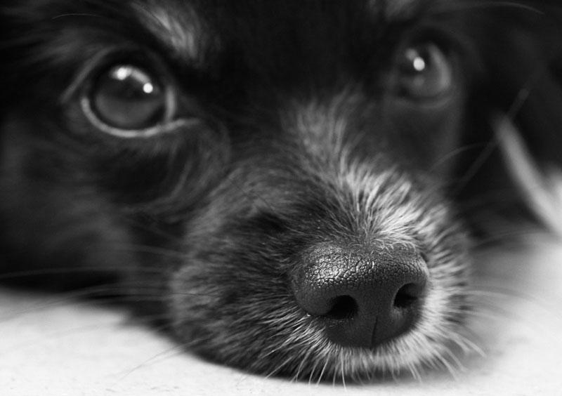 Hilfe, mein Hund hat einen Giftköder erwischt! Was kann ich tun?