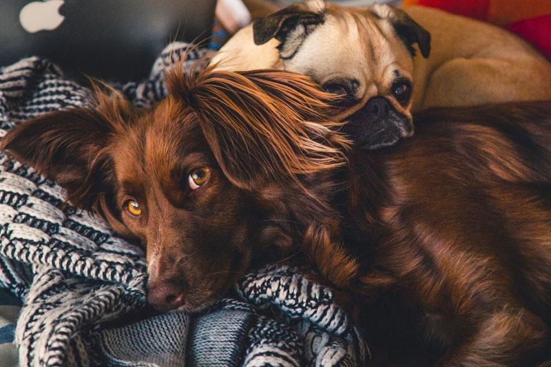 Dem Hund beim Entspannen helfen – 7 Tipps, die du sofort umsetzen kannst