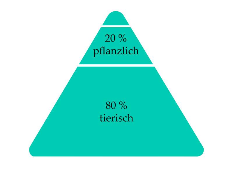 Hund-Ernährungspyramide