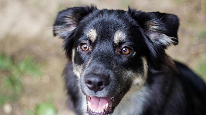 Natürliche-Rohstoffe-im-Hundefutter