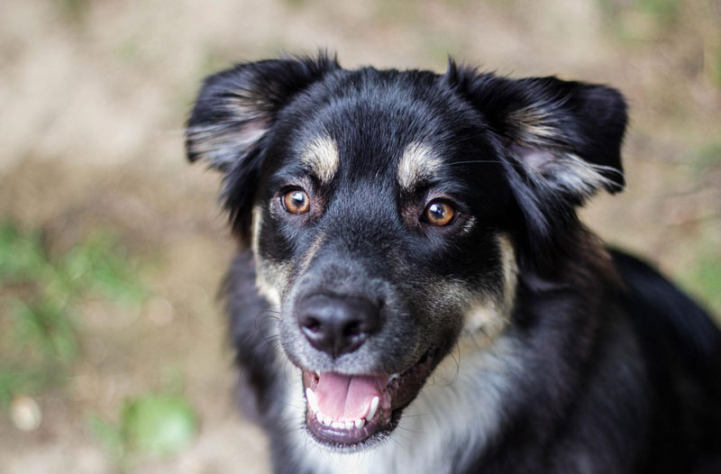Die wichtigsten natürlichen Zutaten und Rohstoffe im Hundefutter: was muss enthalten sein?