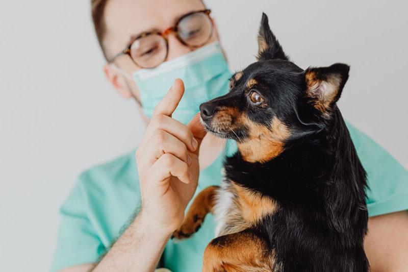 Das richtige Hundefutter bei Analdrüsenproblemen
