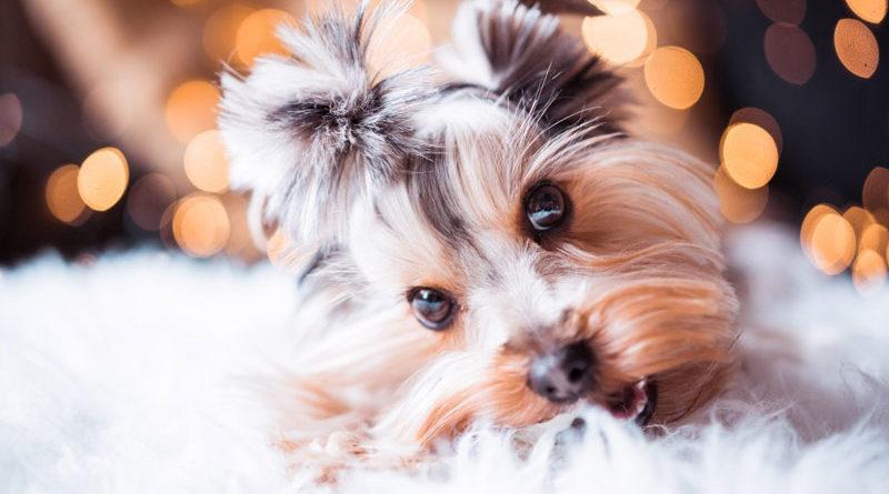 Weihnachten-für-Hunde