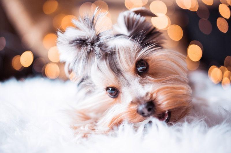 Weihnachtsrezepte für Hunde (& was du rund ums Fest sonst noch unbedingt wissen musst)