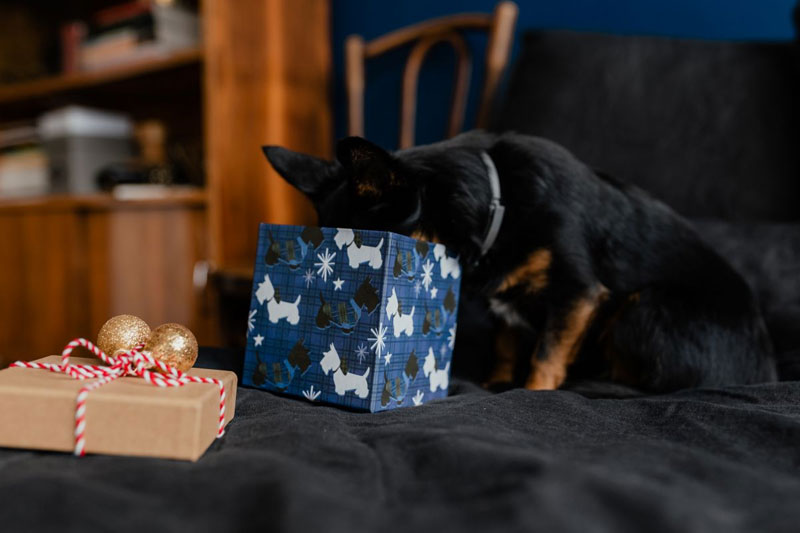 Weihnachtsgeschenk-für-Hunde