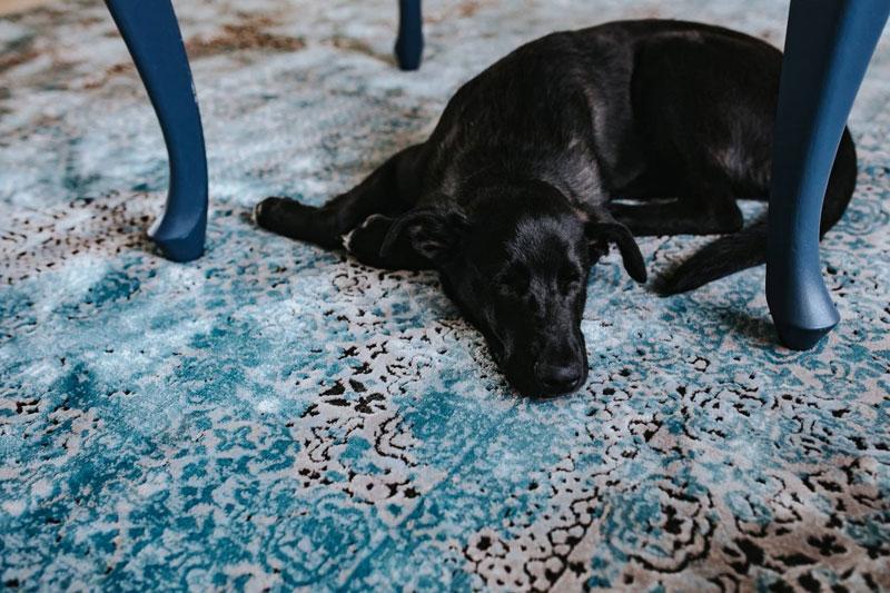 Hund-Milben