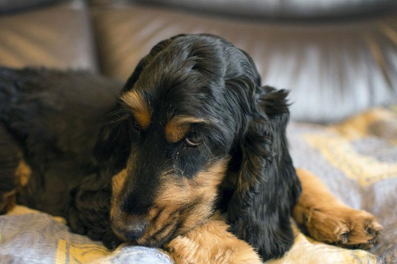 Mein Hund hat Schuppen, was kann ich tun?