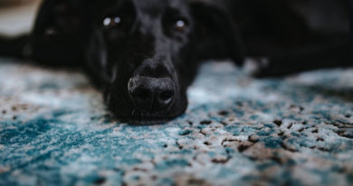 Milbenarten-beim-Hund