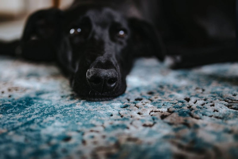 You are currently viewing 6 Milbenarten, die deinem Hund das Leben schwermachen