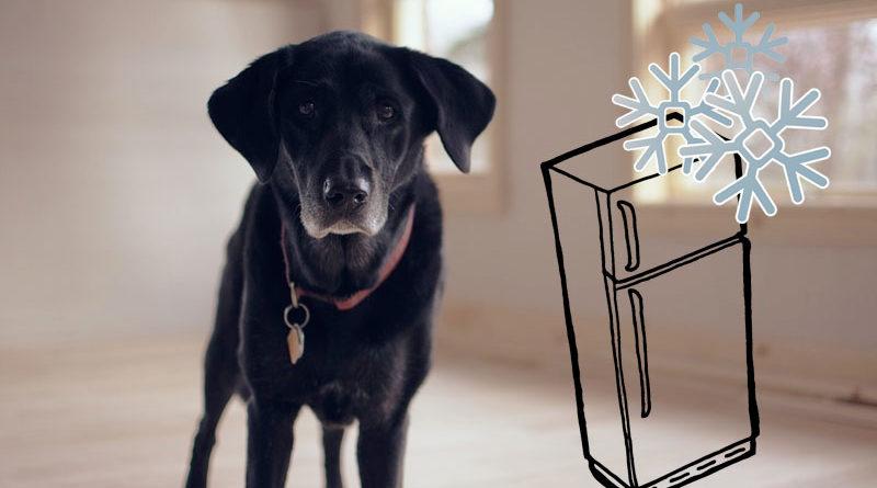 Hundefutter-einfrieren