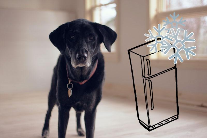 Kann man Nassfutter für den Hund eigentlich einfrieren?