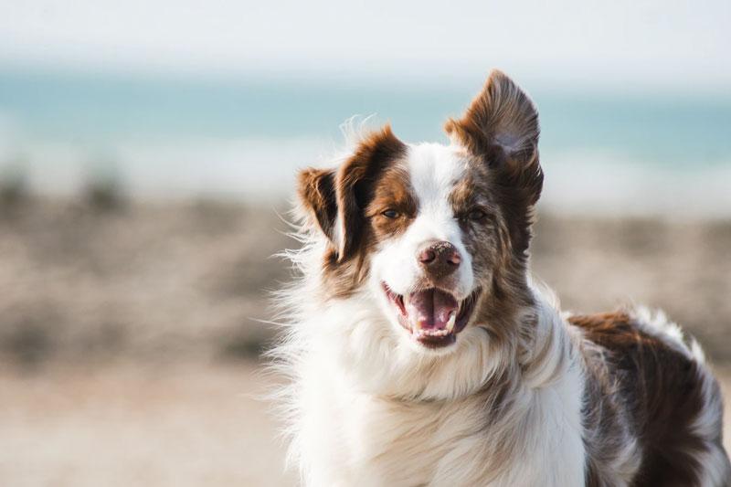 Wann macht Nahrungsergänzung beim Hund einen Sinn?