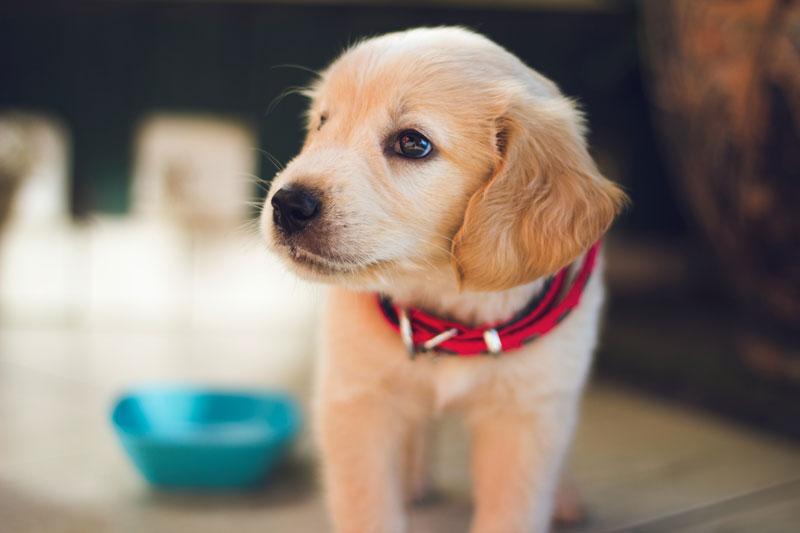 Die eiweißarme Ernährung des Hundes