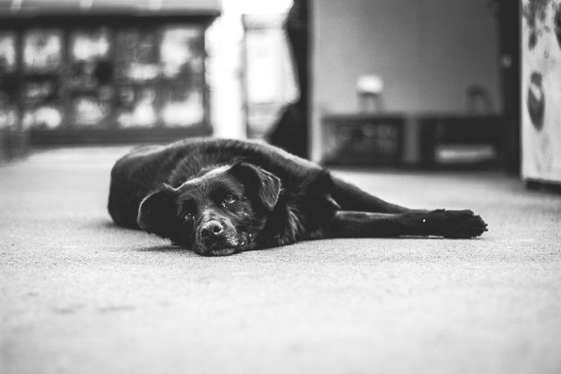 Demenz bei Hunden – was muss man bei der Fütterung nun beachten?