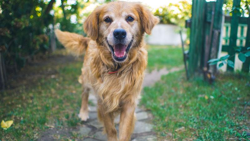 Epilepsie bei Hunden – was muss man bei der Fütterung nun beachten?