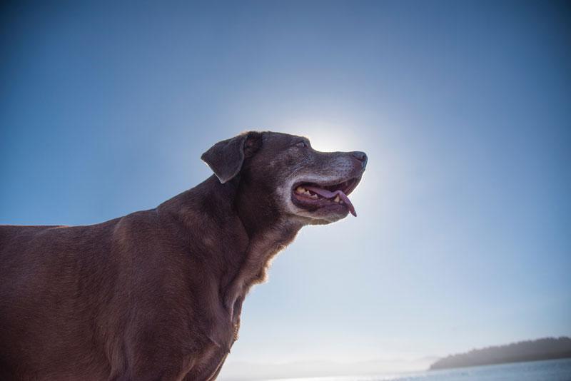 Hund-mit-Demenz