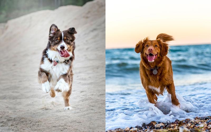 Bewegung-für-das-Immunsystem-des-Hundes