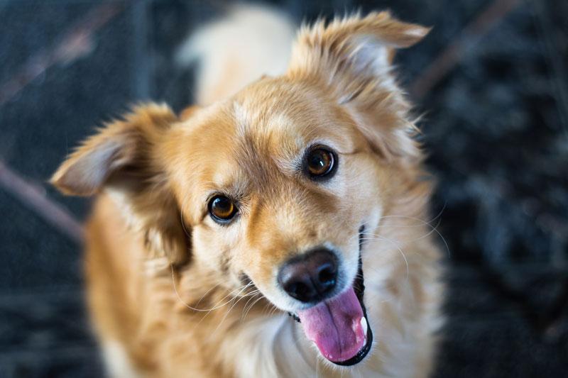 Stärke das Immunsystem deines Hundes durch die richtige Ernährung