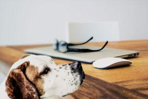 Produktrückruf-von-Hundefutter