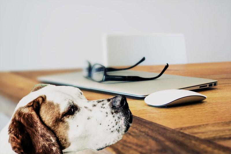 Rückrufaktionen beim Hundefutter – ein Überblick