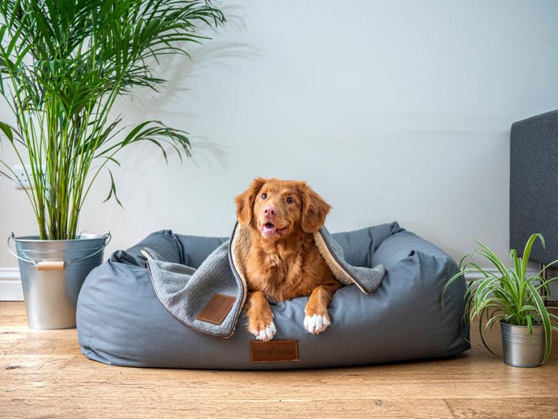 Den Hundedarm im Gleichgewicht halten – das musst du dazu wissen