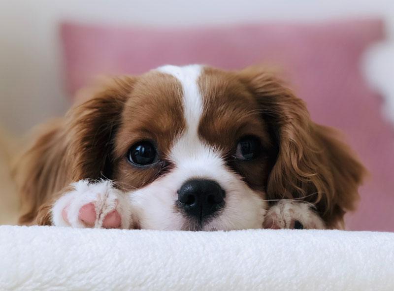 Colostrum für Hunde – Erklärung, Wirkung & richtiger Einsatz