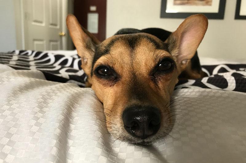 Hundefutter nach Erbrechen: Was muss ich nun beachten?