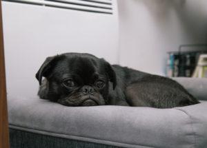 Hundefutter-nach-Magendrehung