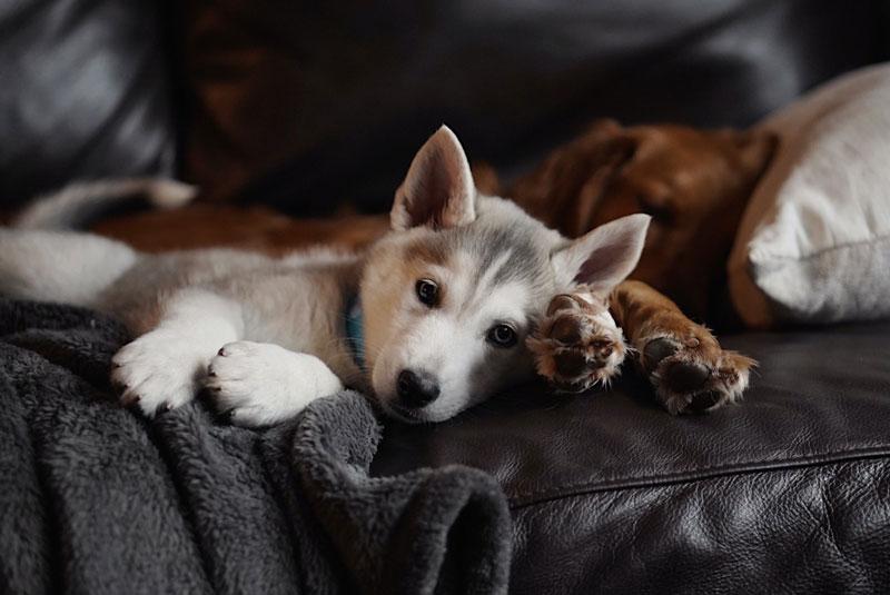 Read more about the article Mein Hund hat häufig Blähungen, was kann ich tun?